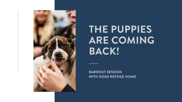barkout session with dogs refuge home